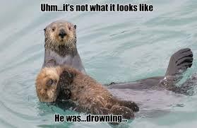 Sea Otter Meme - 18 otter memes that will make you lol azula for the love of oceans