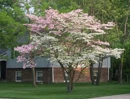 albero giardino vivaio piante udine progettazione giardini udine provincia e