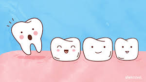 a timeline for your child u0027s tooth loss