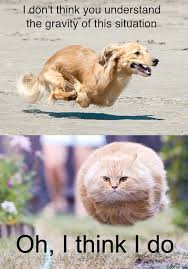 Funny Dog Face Meme - i died laughing just look at the cats face hahahaha funny and