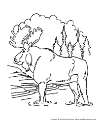 bull moose animal coloring pages moose coloring honkingdonkey