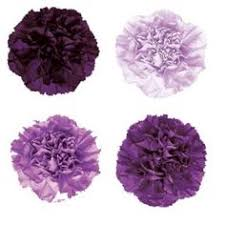 Purple Carnations The Addition Of Purple Carnation U0027s To Your Wedding Bouquet Will