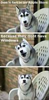 best 25 meme ideas on pinterest funny dog pictures funny