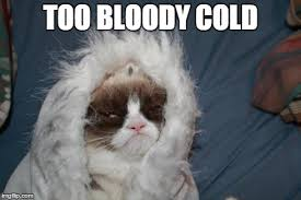 Cold Meme - cold grumpy cat imgflip