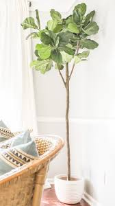 the best faux fiddle leaf fig tree where i got the most realistic