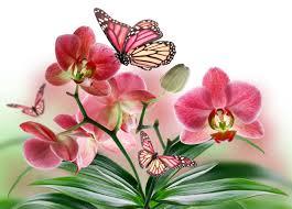 Flower Orchid Flower Orchid Butterflies Beautiful Spring Flowers Wallpapers High