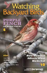 Backyard Birds Utah Wbb Issues Archive Bird Watcher U0027s Digest