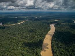 learn about the amazon rainforest with céline cousteau u0027s tribes on