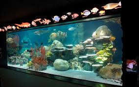 Aquarium Decor Ideas Decor Gorgeous Interesting Glass Aquarium Big Fish Tanks For Sale