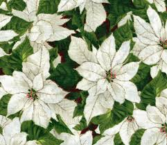 white poinsettia cotton quilt fabric christmas packed white poinsettia gold