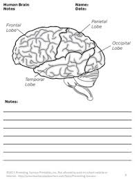 human brain science crossword puzzle human body systems worksheets