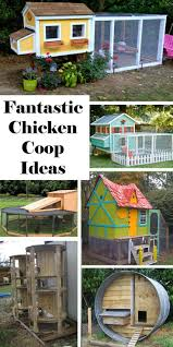 143 best chickens images on pinterest backyard chickens chicken