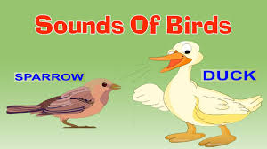 types of birds for kids with sounds preschool learning videos