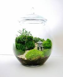 incredible diy terrarium garden ideas garden ideas design ideas