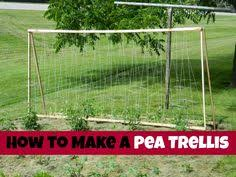 easy pea trellis other plant updates of note are that the sugar snap peas are