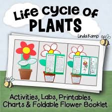 Life Cycle Of A Flowering Plant - life cycle of plants 20 activities labs printables u0026 foldable