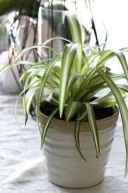plantes dépolluantes chambre à coucher plantes depolluantes chambre a coucher markez info