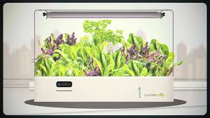 countercrop a smart indoor garden for your countertop youtube