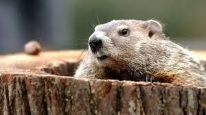 groundhog explore gwinnett events