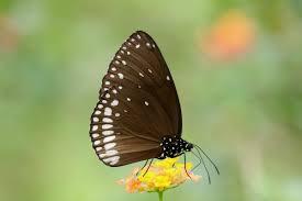 butterflies ss butterfly park
