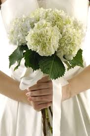 hydrangea wedding bouquet hydrangea bouquets i the green and white ivory together