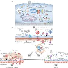 influenza virus induced lung injury pathogenesis and implications