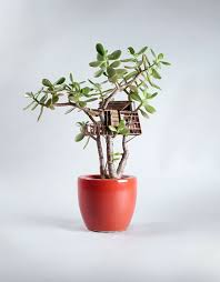 tiny treehouses for houseplants by jedediah corwyn voltz