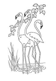 luxurious and splendid flamingo coloring pages free printable