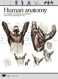 Anatomy And Physiology Pdf Free Download Imaginefx Howtodrawandpaintanatom Considerable Anatomy Drawing Pdf