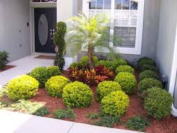 decorative trees for home ornamental trees for landscaping the best small trees for