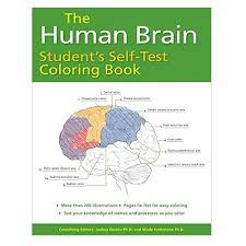 the human brain student u0027s self test coloring book medical artist