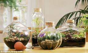 Bottle Garden Ideas Glass Act Bottled Gardens Make Pretty Projects When It S Cold