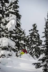 Cool Tree by 41 Best Cool Tree Ski Pics Images On Pinterest Skiing Powder