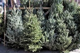 christmas trees risser marvel farm market 2425 horseshoe pike