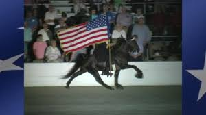 Horse With American Flag 2015 Twhnc Tribute To