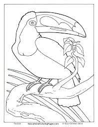 25 animal coloring pages ideas turtle images