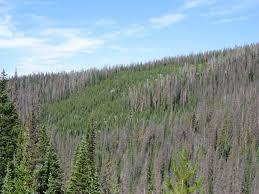 colors of wildfire risk do dead trees increase the threat