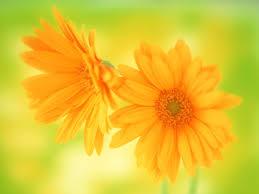 Beautiful Flowers Beautiful Flowers Wallpapers For Desktop Hd Flowers Ideas