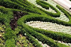 ornamental plants stock image image 871921