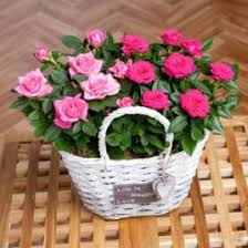 Cheap Flowers Online Buy Cheap Flowers Online With Same And Next Day Delivery