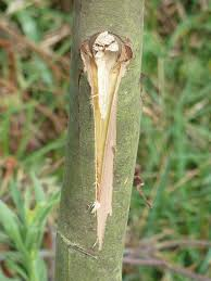 tree wound dressing u2013 information on using dressing on tree wounds