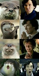 Cumberbatch Otter Meme - list of synonyms and antonyms of the word sherlock otter