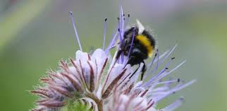Flowers Bees Pollinate - flowers tone down the iridescence of their petals and avoid