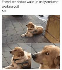 resume templates janitorial supervisor meme dog funny memes clean funny random meme dump imgur funny pinterest random meme
