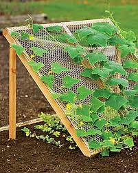 How To Grow Green Beans On A Trellis Cucumbers Like It Lettuce Likes It Cool And Shady But With A