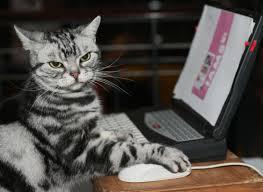 Sassy Cat Meme - sassy cat blank template imgflip