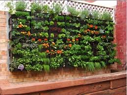 vertical wall garden integrating an aquaponics system on life