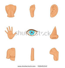 Cartoon Human Anatomy Ear Icon Cartoon Illustration Human Ear Stock Vector 510932644