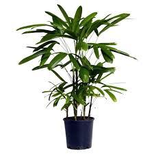 top house plants popular indoor plants ezpass club