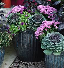best 25 fall container gardening ideas on pinterest fall potted